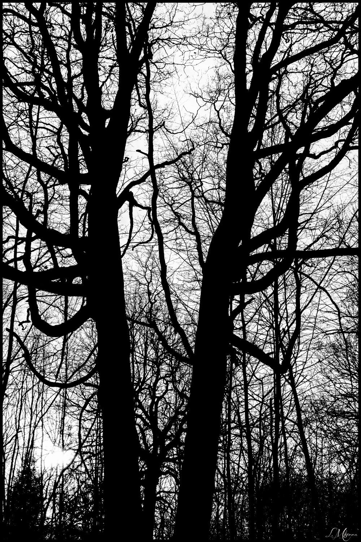 tree-ink